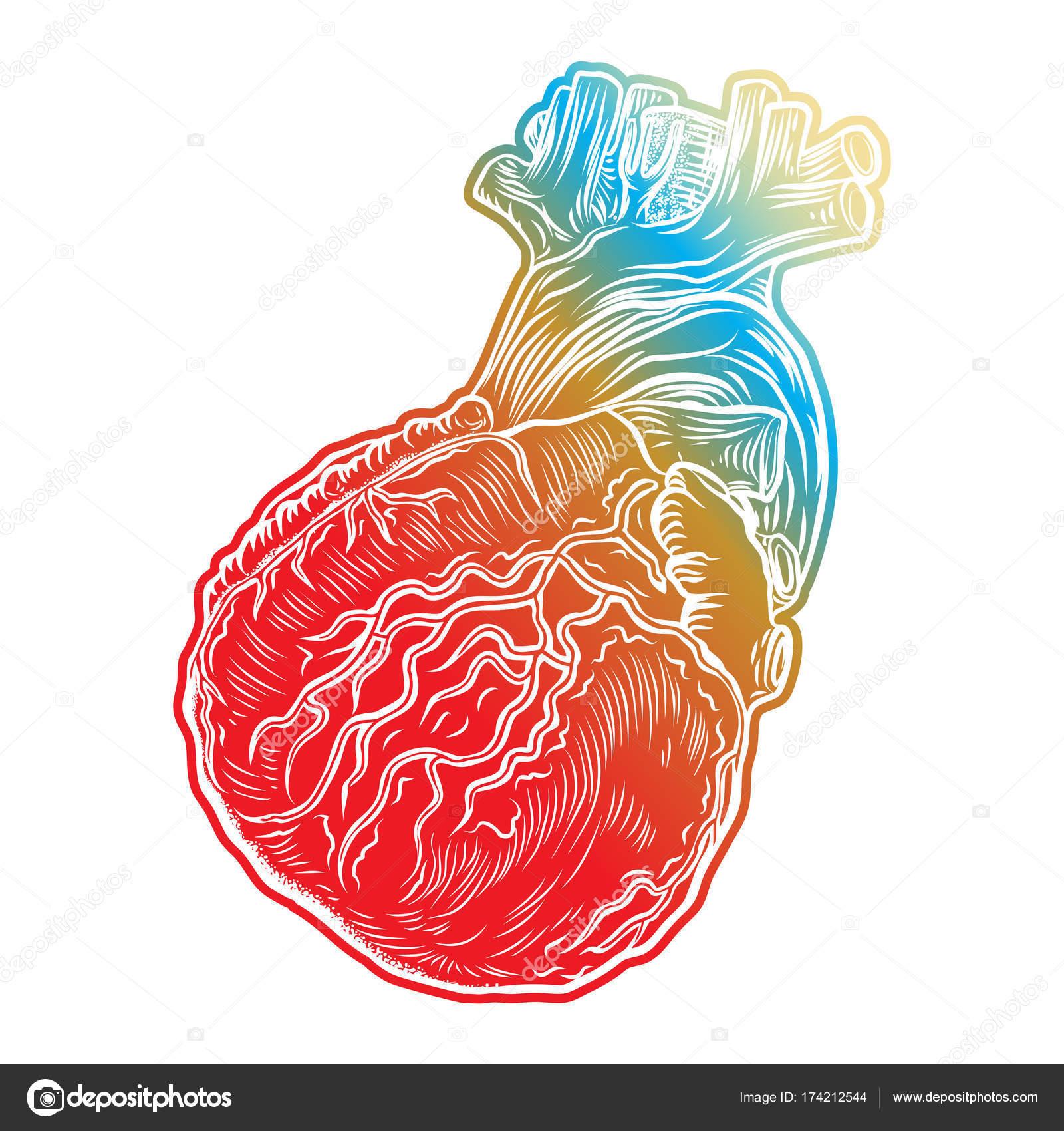 Skizze des menschlichen Herzens — Stockvektor © goldenshrimp #174212544