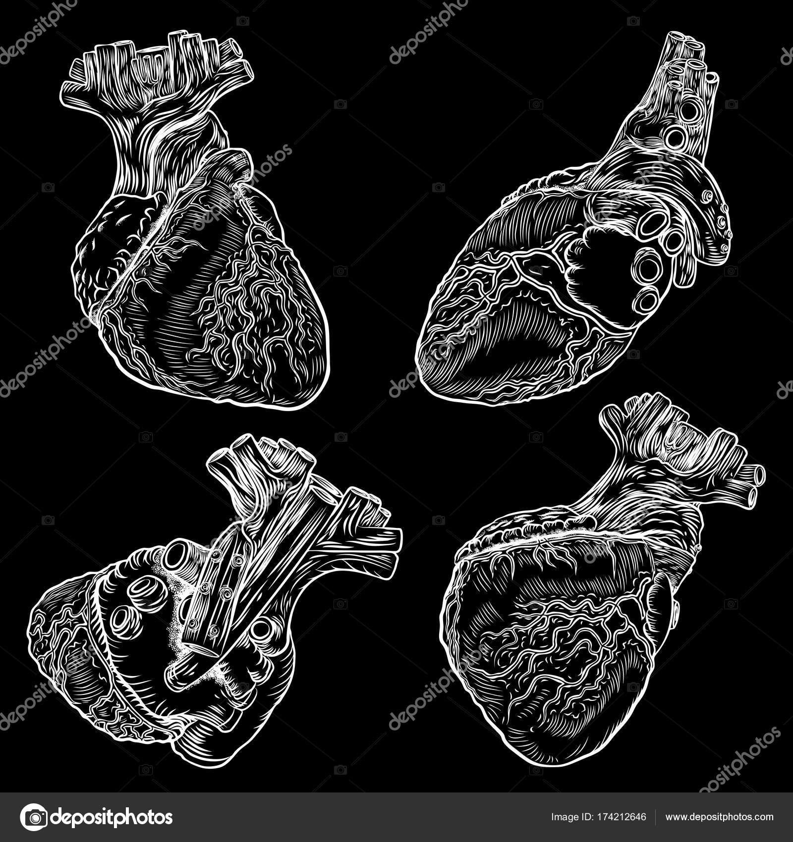 Conjunto de corazones anatómicos — Archivo Imágenes Vectoriales ...