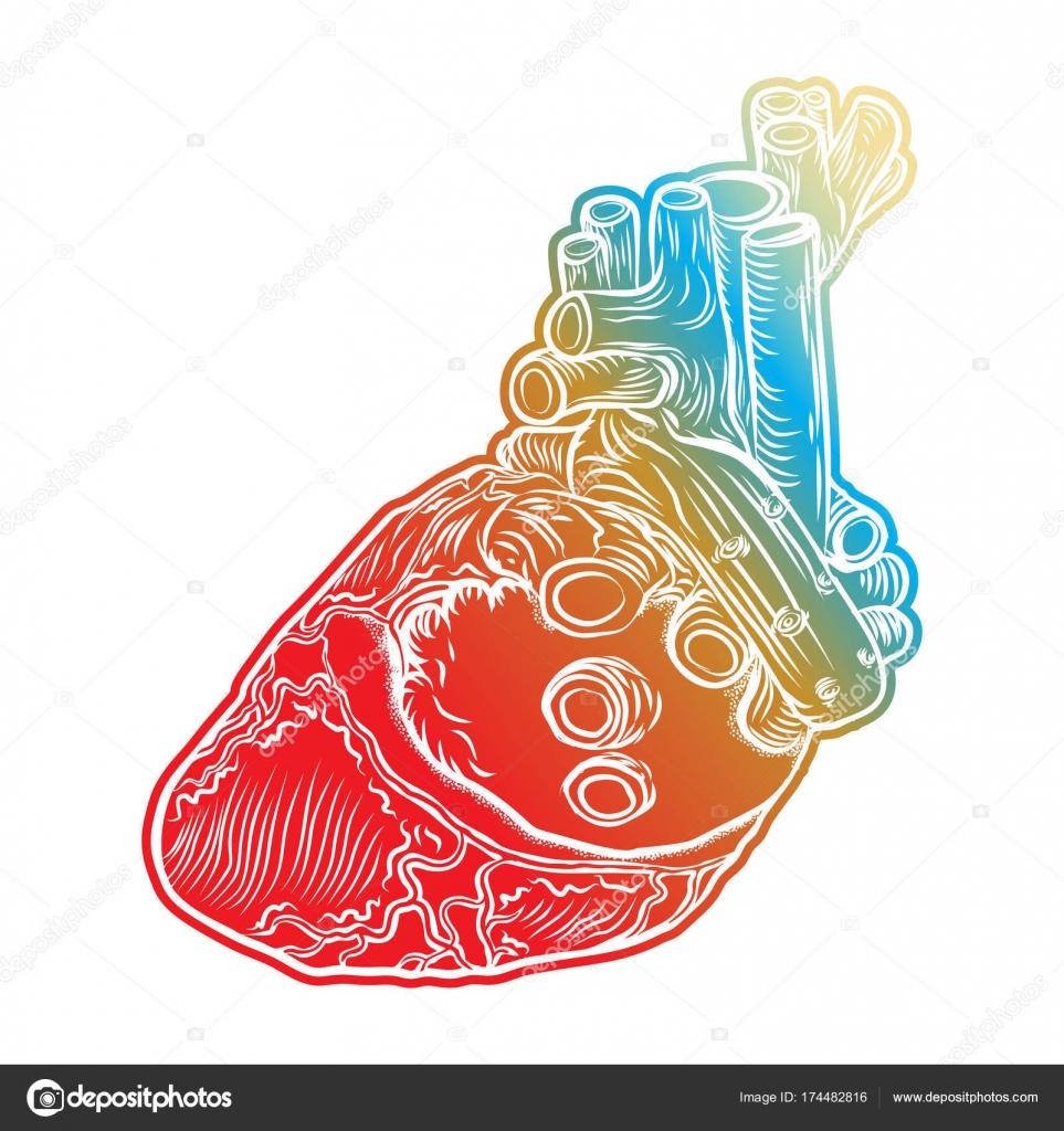Menschlichen Herzen. Handgezeichnete Fleisch-Tattoo-Konzept des ...