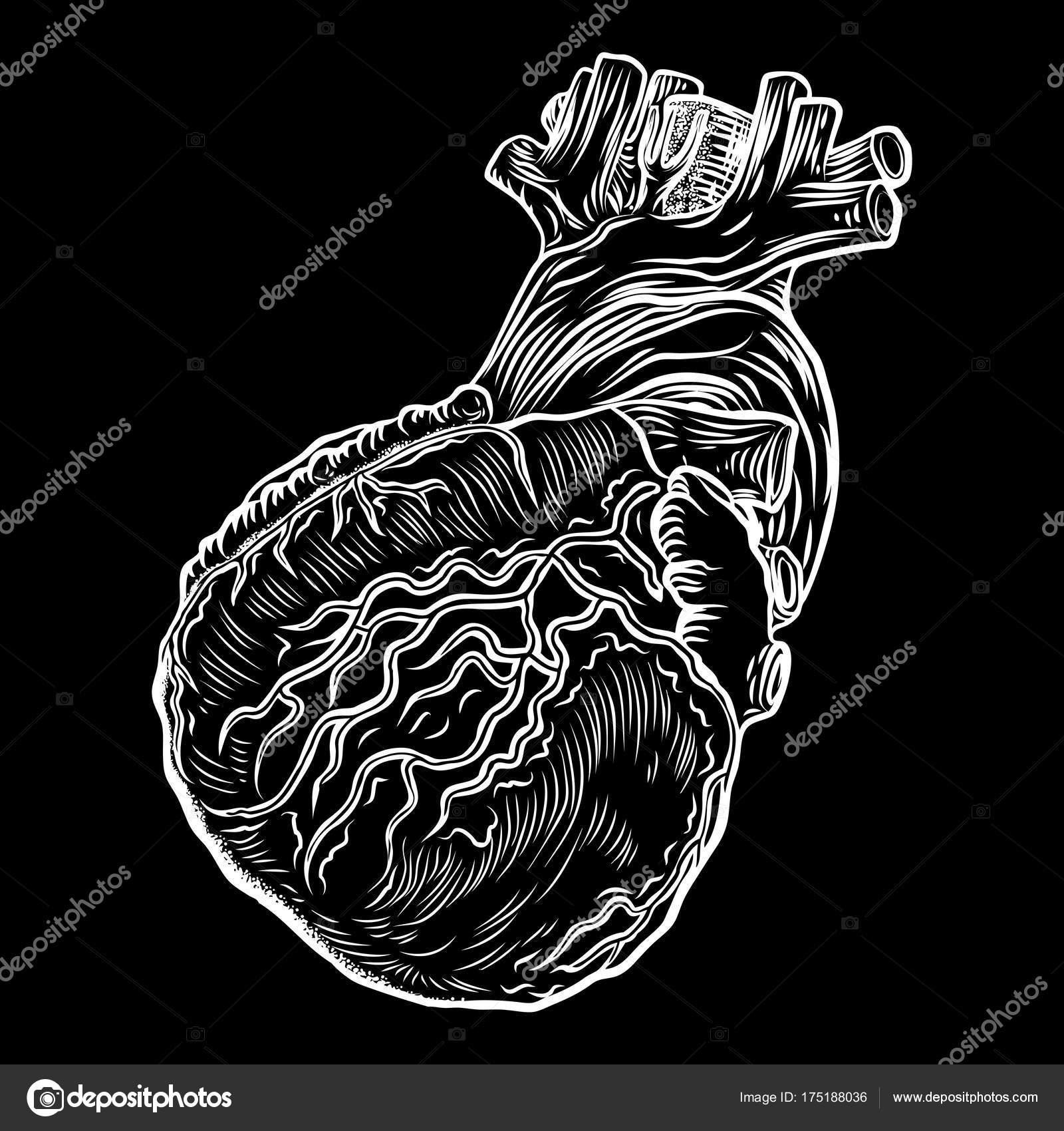 Anatomischen Herz. Hand gezeichnet Flash-tattoo — Stockvektor ...