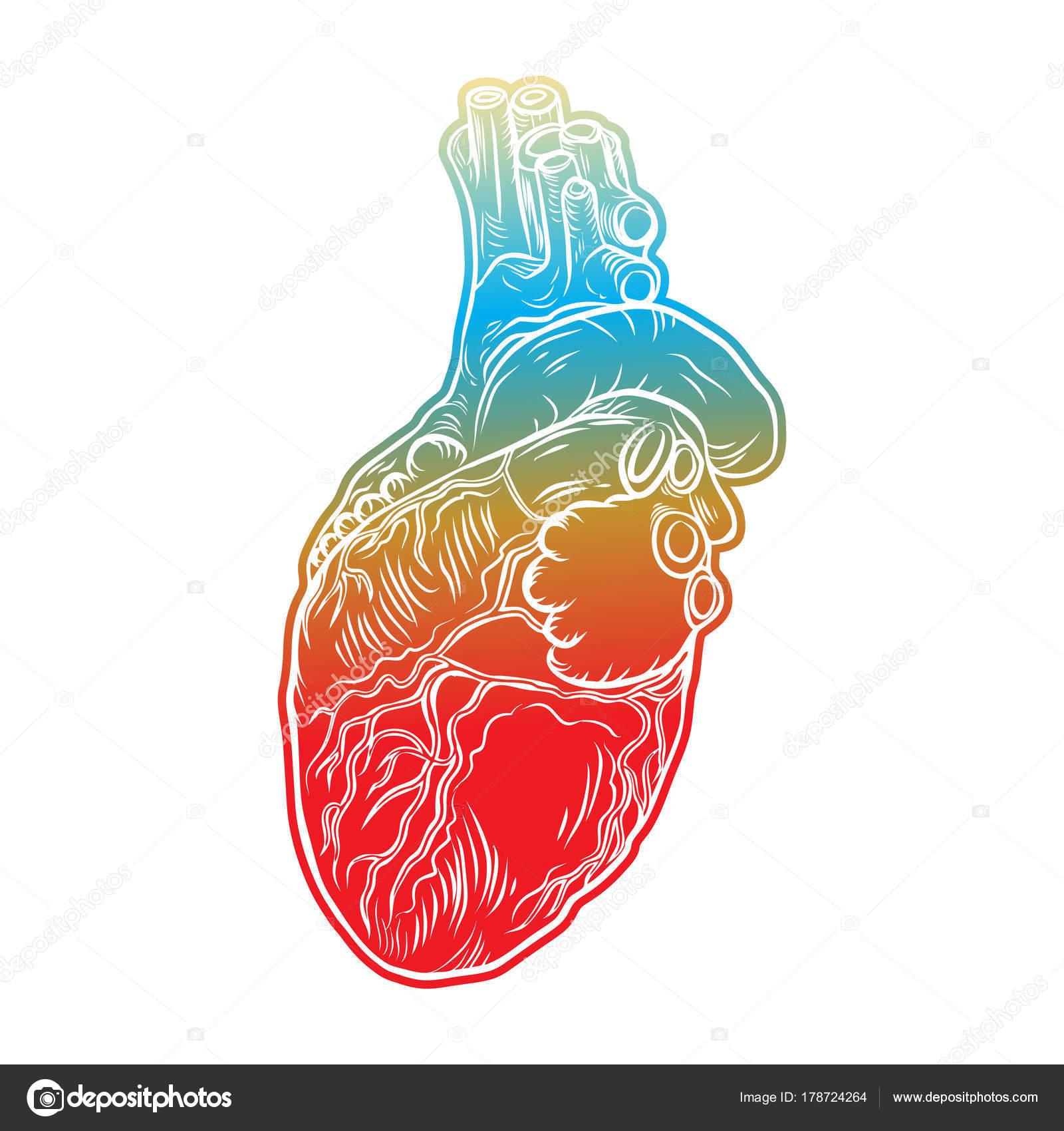 Menschlichen Herzen. Hand-gezogene Fleisch-Tattoo-Konzept ...