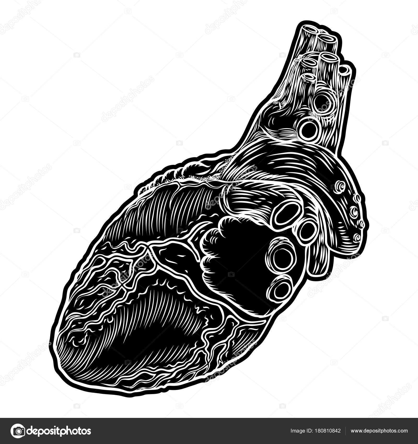 Menschlichen Herzen. Handgezeichnete Fleisch-Tattoo-Konzept von ...