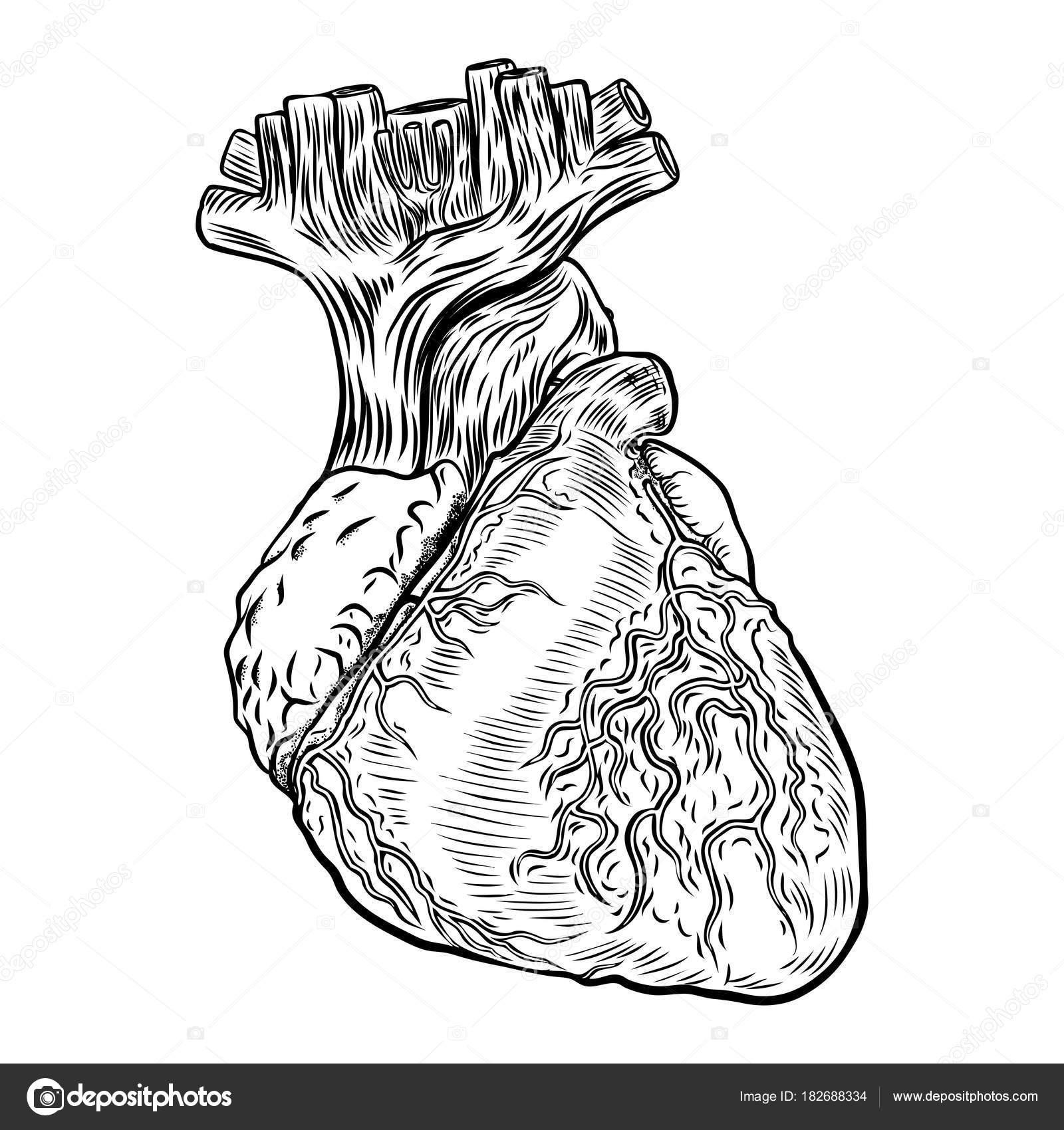 Hand gezeichnet Flash-Tattoo-Konzept der Anatomie Herz — Stockvektor ...
