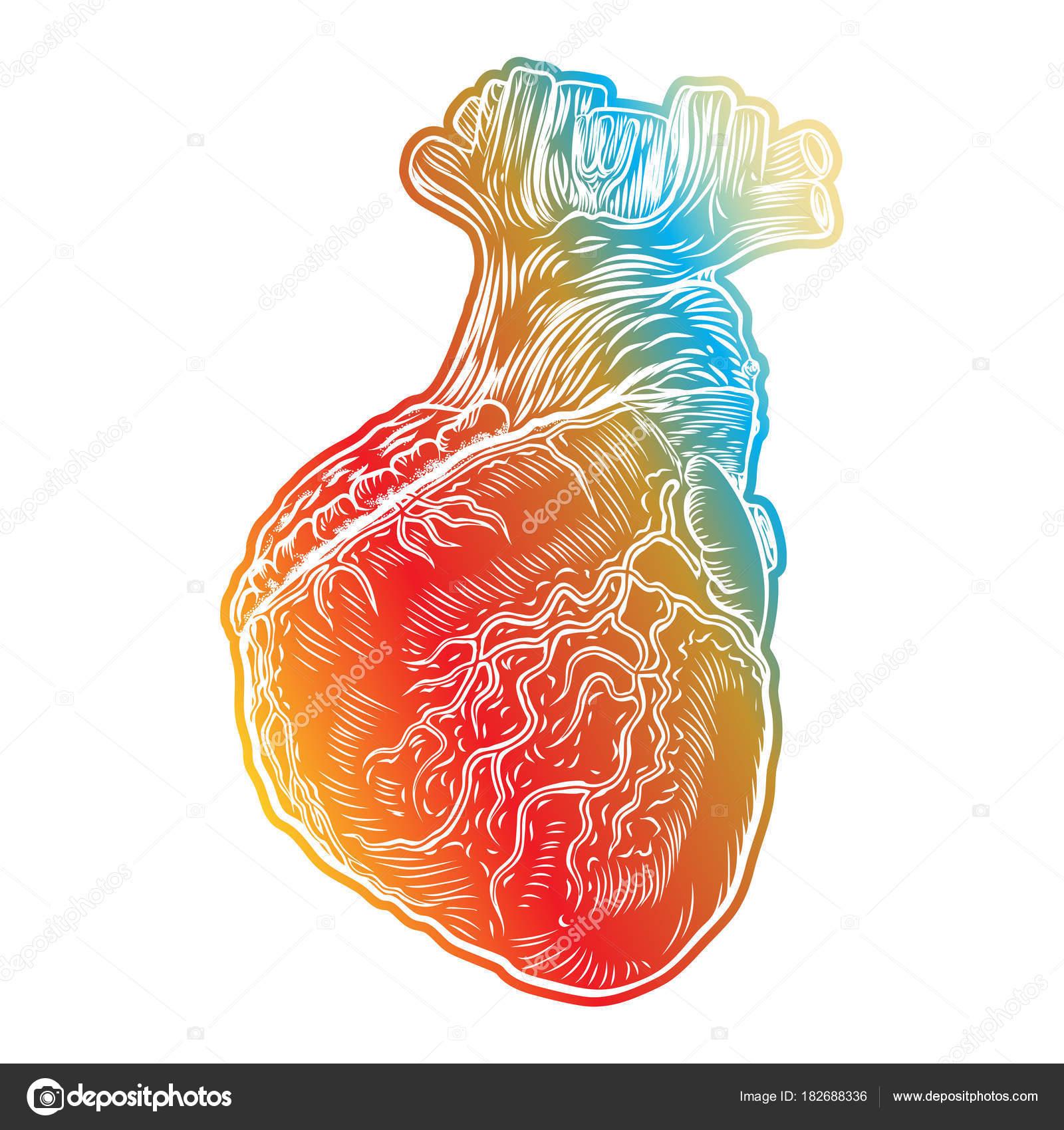 Corazón humano rojo con aorta, venas y arterias — Vector de stock ...