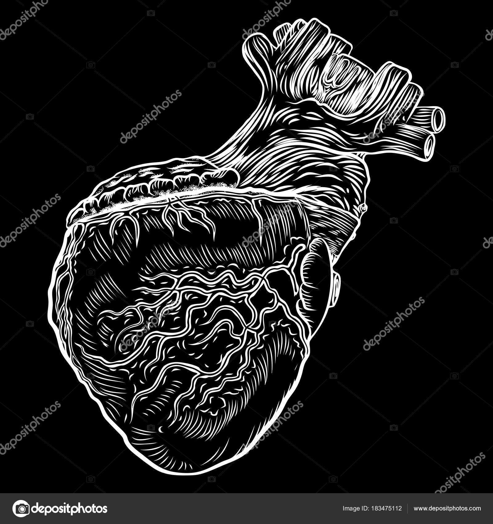 Anatomical heart. Hand drawn flash tattoo concept of anatomy heart ...