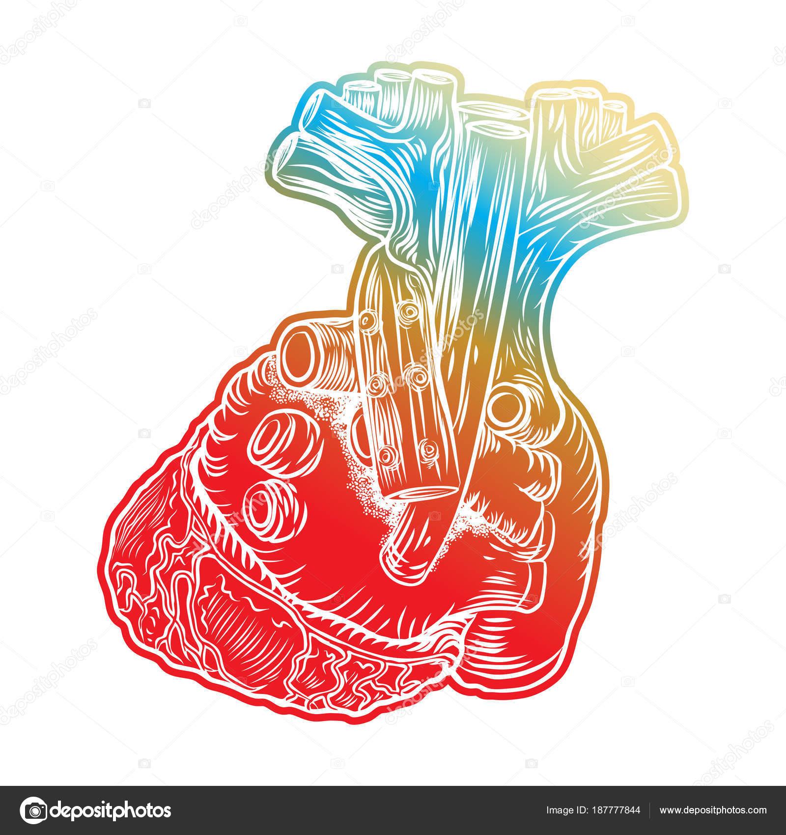 Skizze des menschlichen Herzens. Handgezeichnete anatomische Boho ...