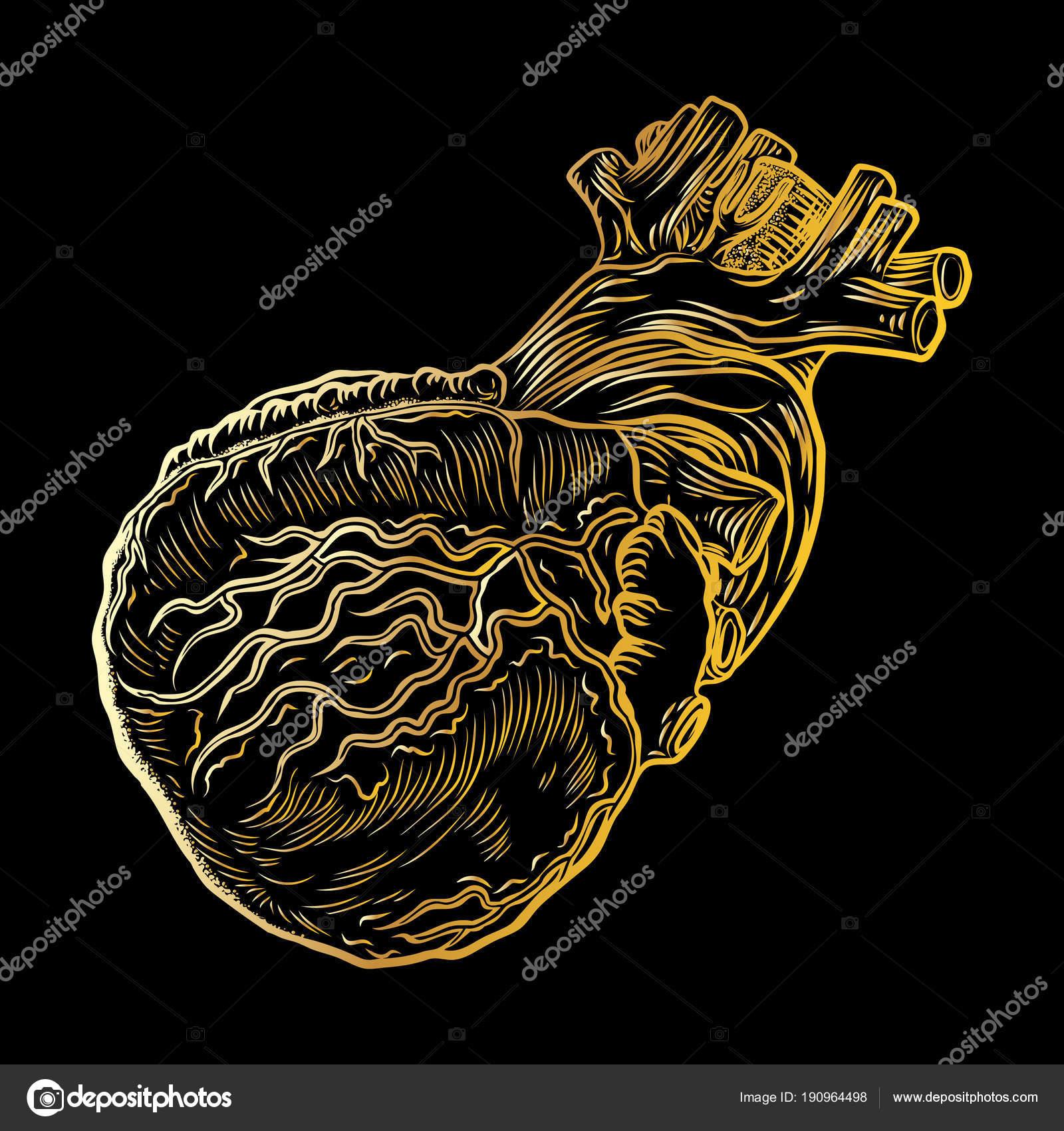 Concepto de cartel oro corazón humano Anatomía, diseño de tarjeta ...
