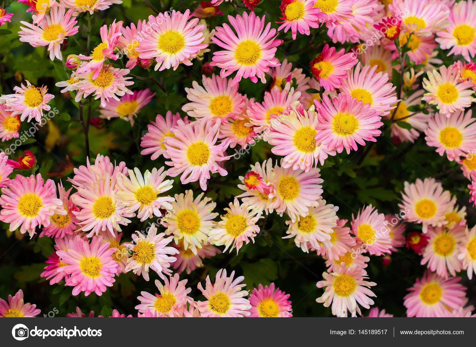 Beautiful flowers in a bouquet different flowers stock photo beautiful flowers in a bouquet different flowers photo by jayne888mail izmirmasajfo