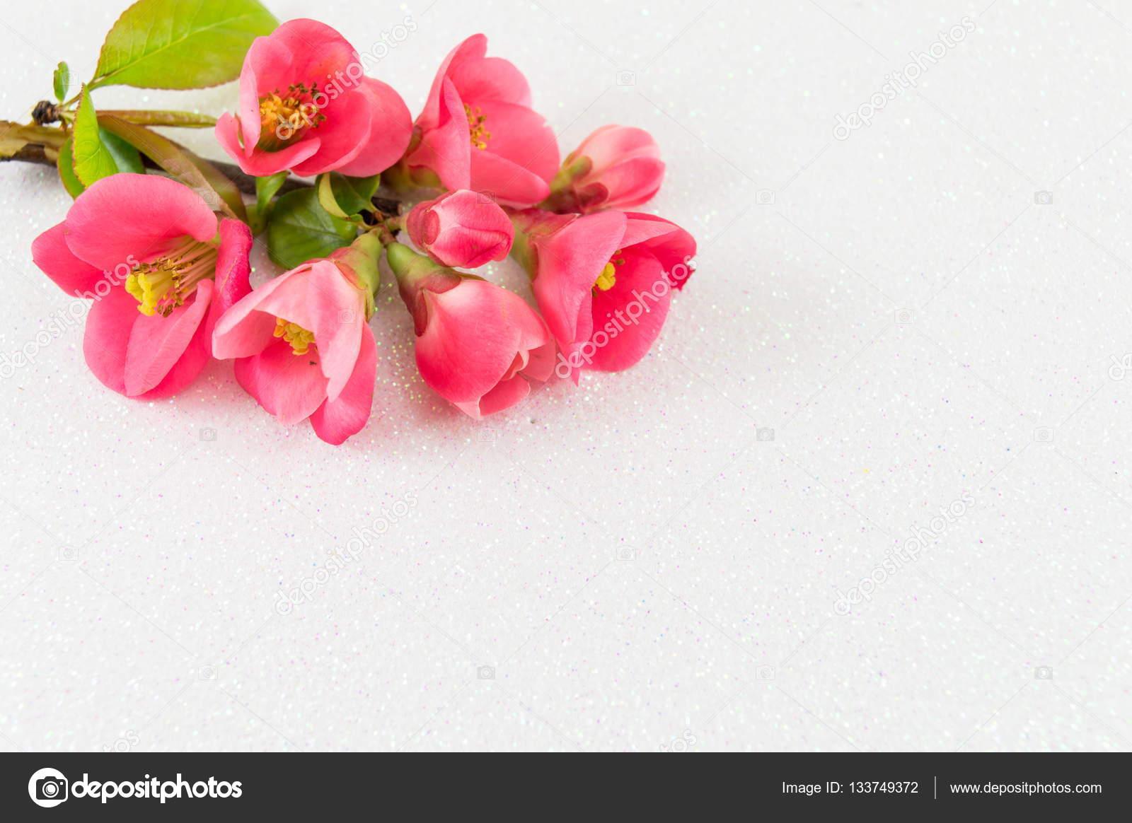 Japanese Rose Flowers On White Background Stock Photo