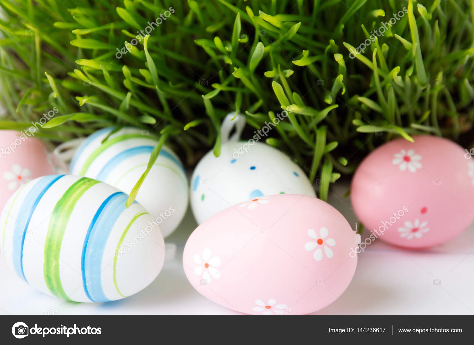 Yumurtadan Bitki