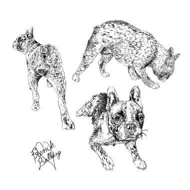 French Bulldog hand drawing set