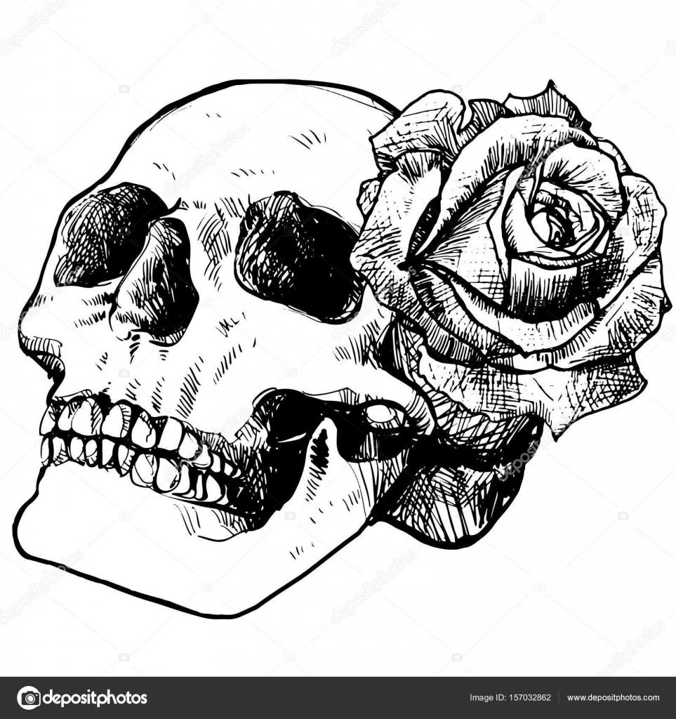 Calavera Y Rosa Dibujo De Contorno Para Halloween Archivo