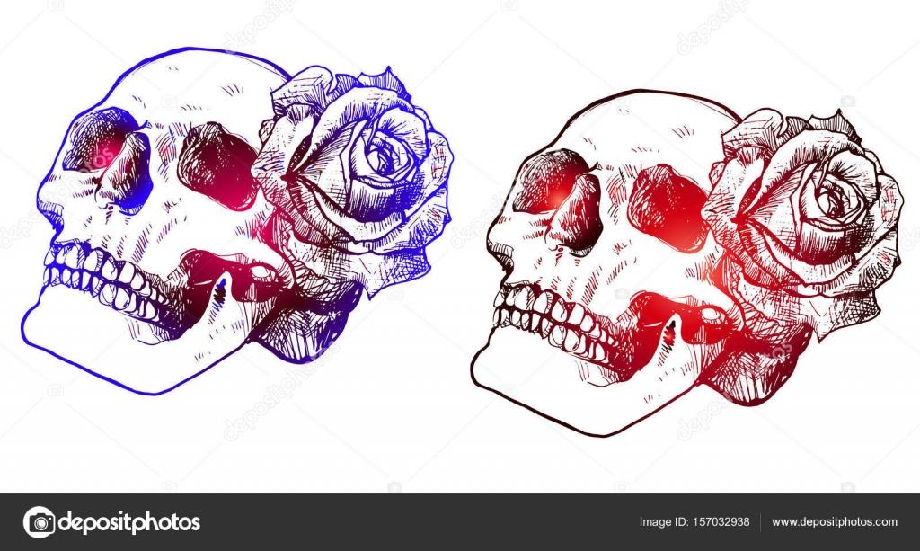 Calavera Dibujo Colores Dos Calaveras Con Rosas Degradado De