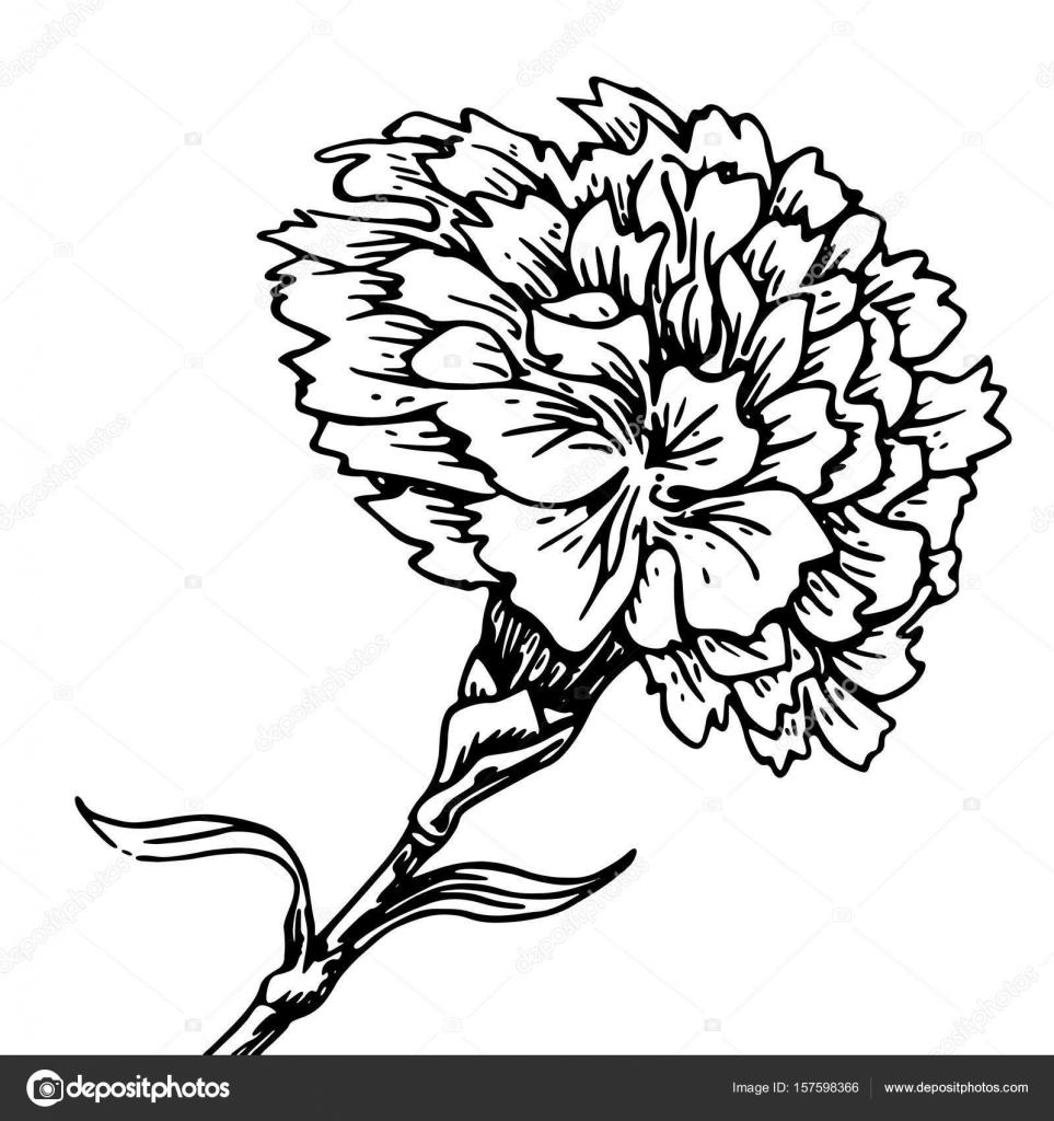 Fleur Oeillet Croquis De Tatouage Image Vectorielle Littlemagic