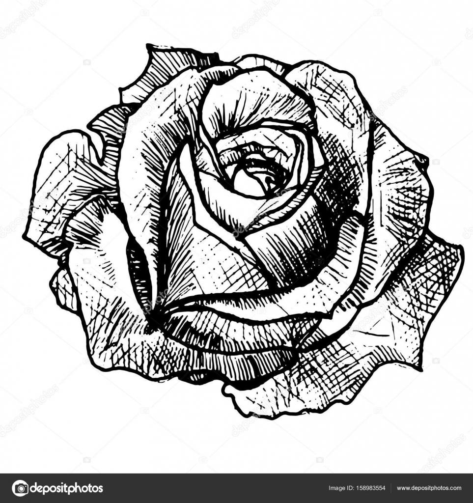 Realistyczne Tatuaż Róża Grafika Wektorowa Littlemagic