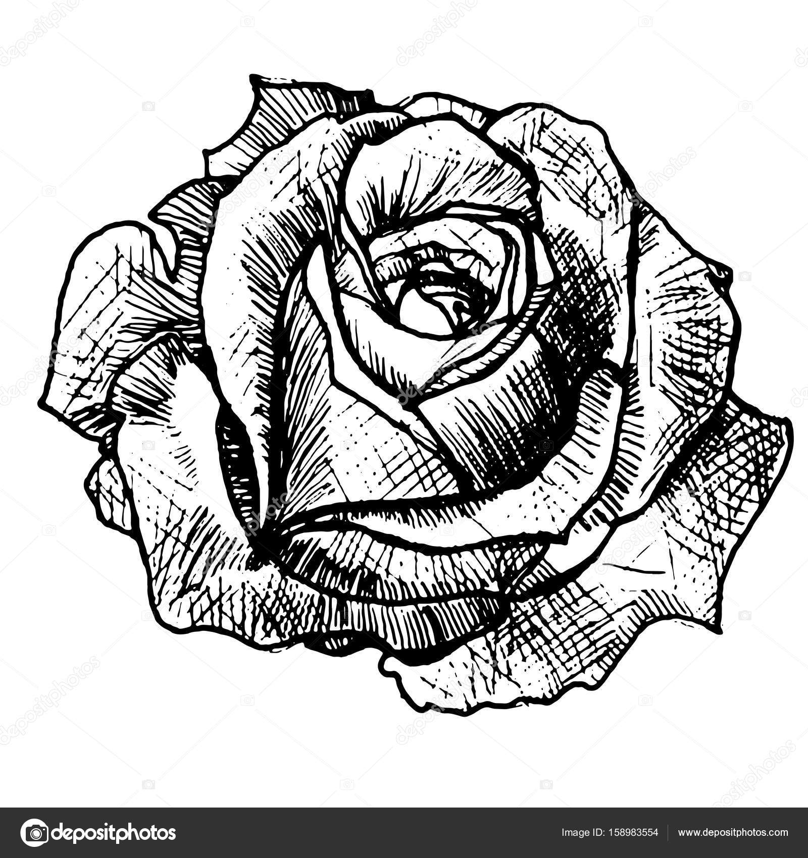 Realistische Rose Tattoo Stockvector Littlemagic 158983554