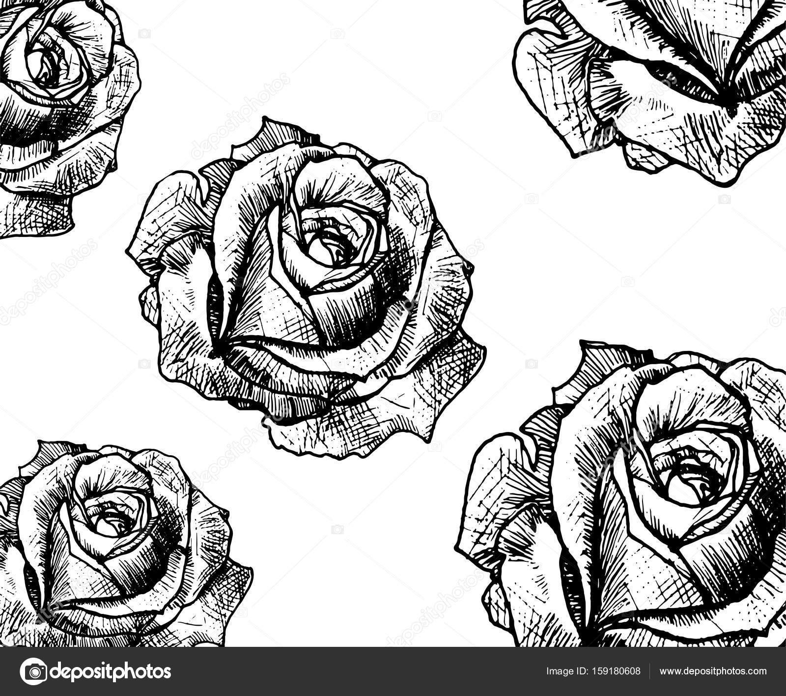 Linii Sztuka Tatuaż Róża Pączek Grafika Wektorowa