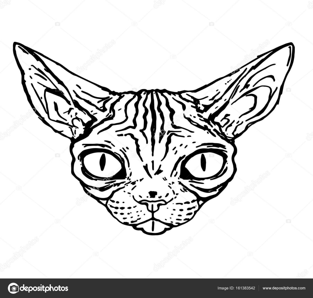 Sketch Of Evil Cat Of The Sphinx Close Up Isolated