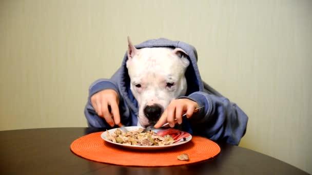Staffordshire Terrier isst mit Messer und Gabel