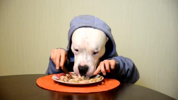 Staffordshire Terrier Essen mit Messer und Gabel