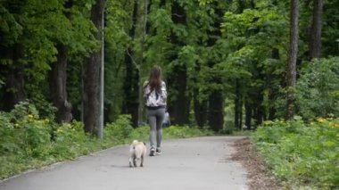 A mopszli tenyészt-ból kutya. Egy lány sétál egy kutya egy zöld pázsit