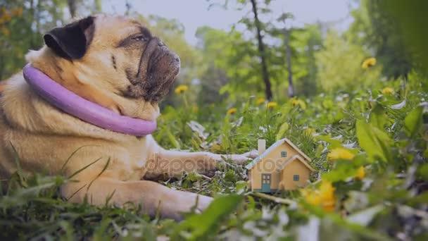 Real estate. Malý soukromý dům stojí na zeleném trávníku.