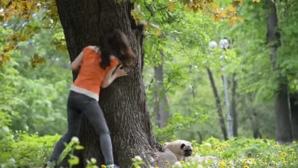 A mopszli tenyészt-ból kutya. Egy lány sétál egy kutya egy zöld pázsit.