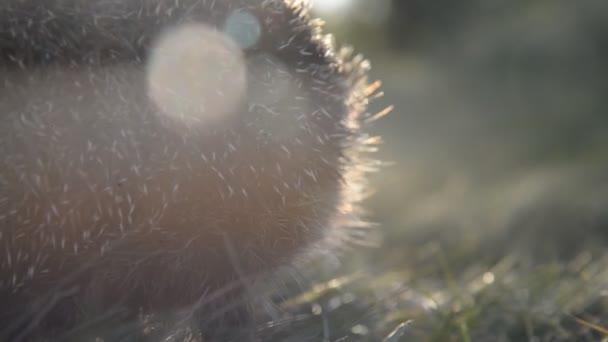 The hedgehog runs along the green path