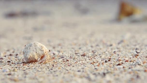 das Weichtier kriecht am Sand im Meer entlang