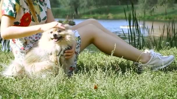 Ein Mädchen geht mit einem Hund im Park spazieren. Pommersche Spitzspitze