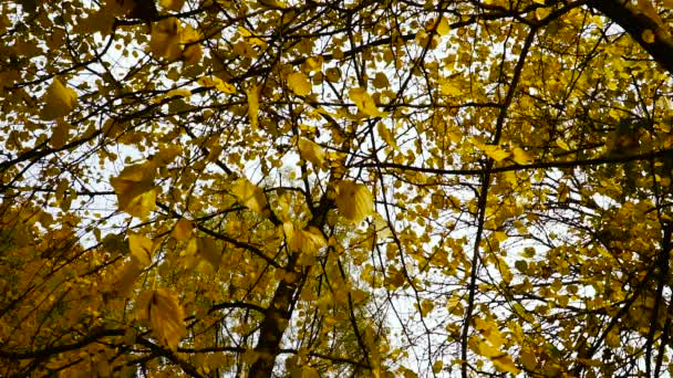 Na podzim. Žluté listy na podzim park