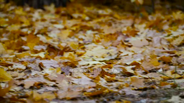 Autumn. Yellow leaves in autumn park