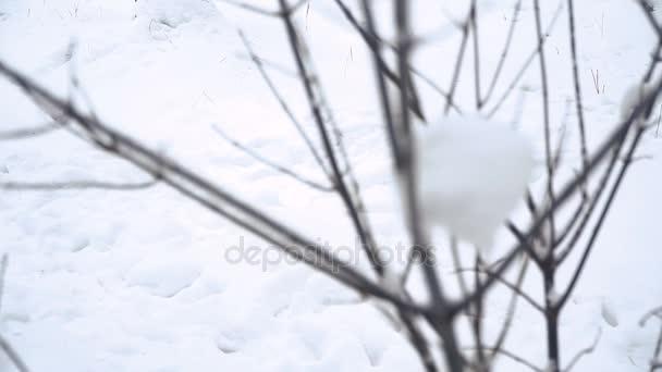 Téli. Fenyves hóval borított erdő