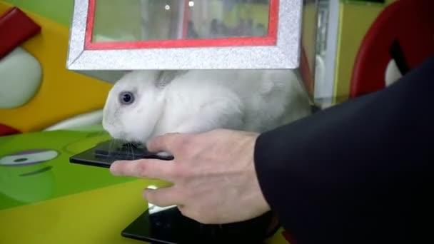 Bílý králík. Králík v poli pro triky