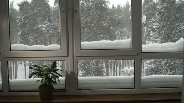 Okno. Okno s výhledem na zasněženém lese