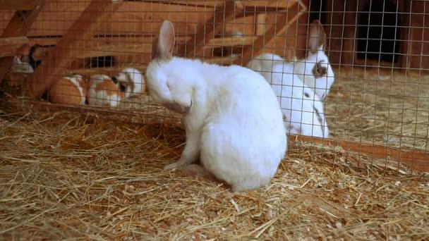 Kaninchen. Kaninchen ist schlafen
