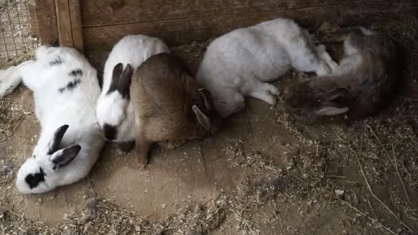 Rabbit. Rabbit is sleeping