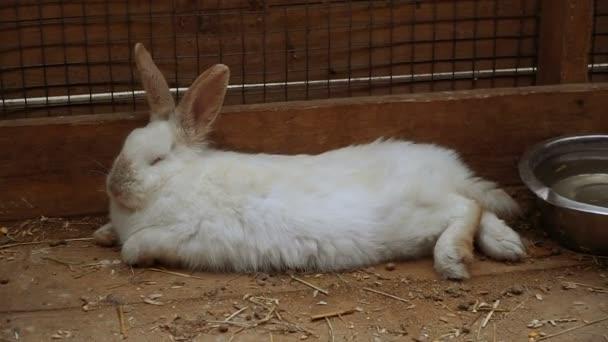 Kaninchen. Kaninchen schläft