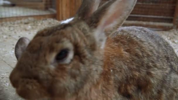 Coniglio. Coniglio sta dormendo