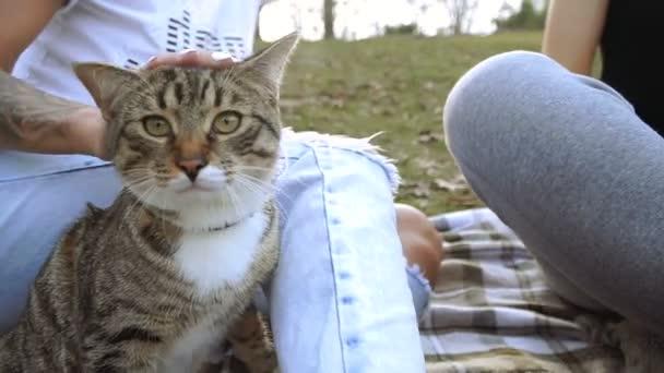 Kočka a pes. Jorkšírský teriér sedí vedle kočka