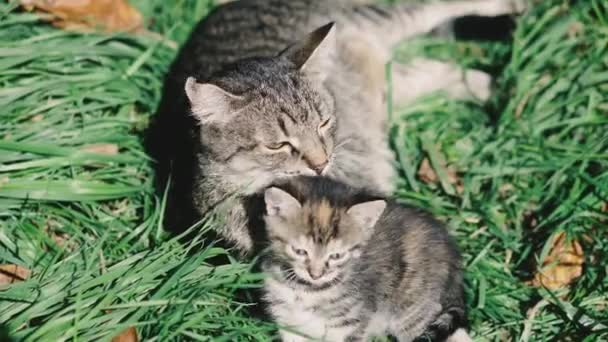 Cat and kittens. The cat and kittens are lying on the green lawn and play.