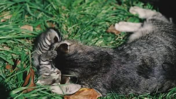 Kočka a koťata. Kočka a koťata leží na zeleném trávníku a hrají si.