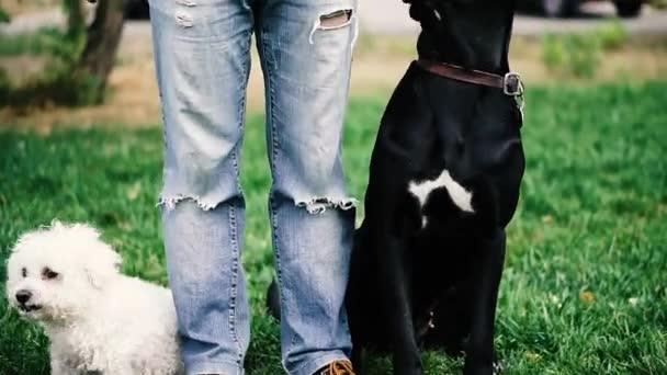 Kutyák tenyésztik a pudlit és a Cane Corso-t. A kutyák a gazdájuk mellett állnak..