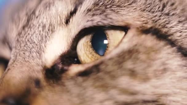 Mata Kucing Stok Video Mata Kucing Rekaman Bebas Royalti Depositphotos