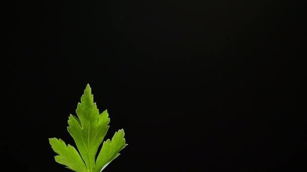 Zelený list na černém pozadí