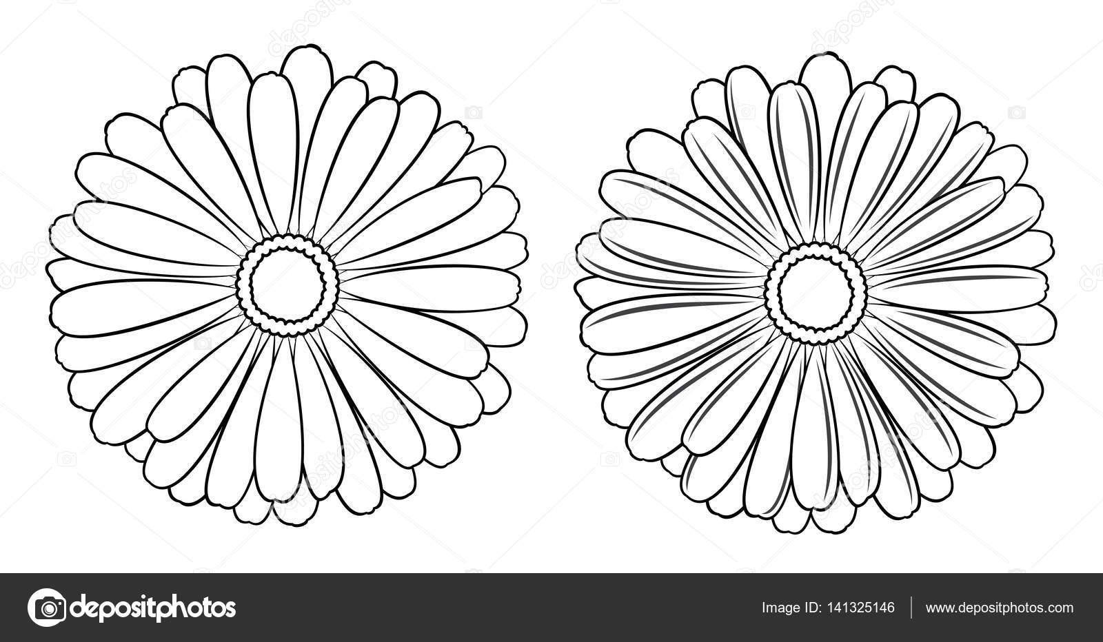 Girasoles Para Colorear Grandes Conjunto De Vector Floral De