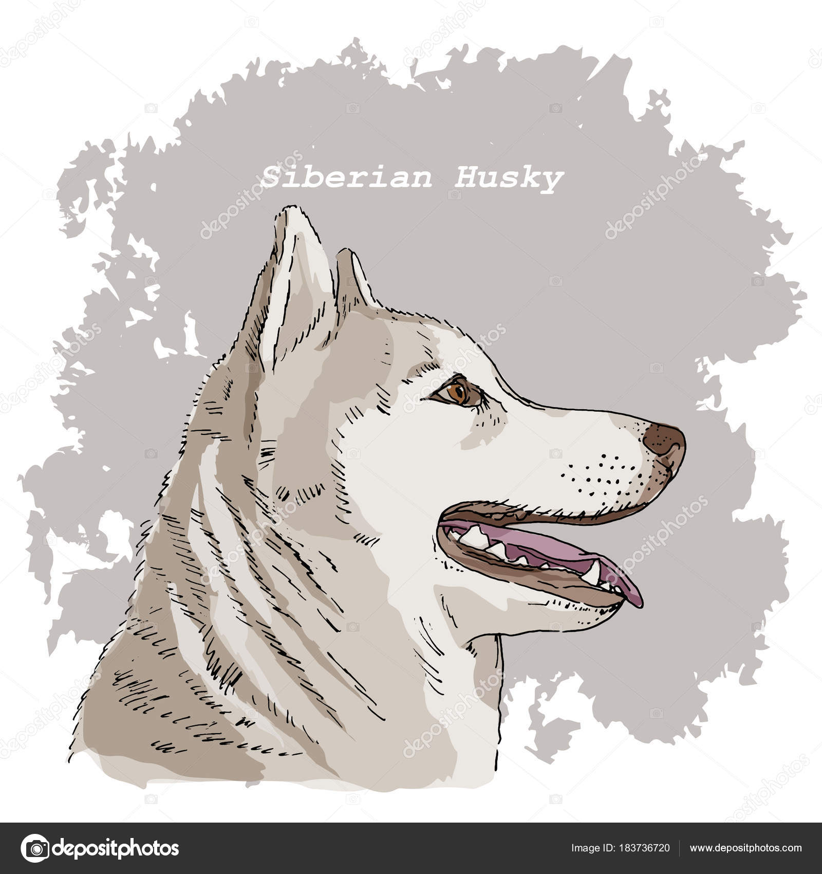 Breeds Dogs Collection Siberian Husky Hand Drawn Sketch Dog Head