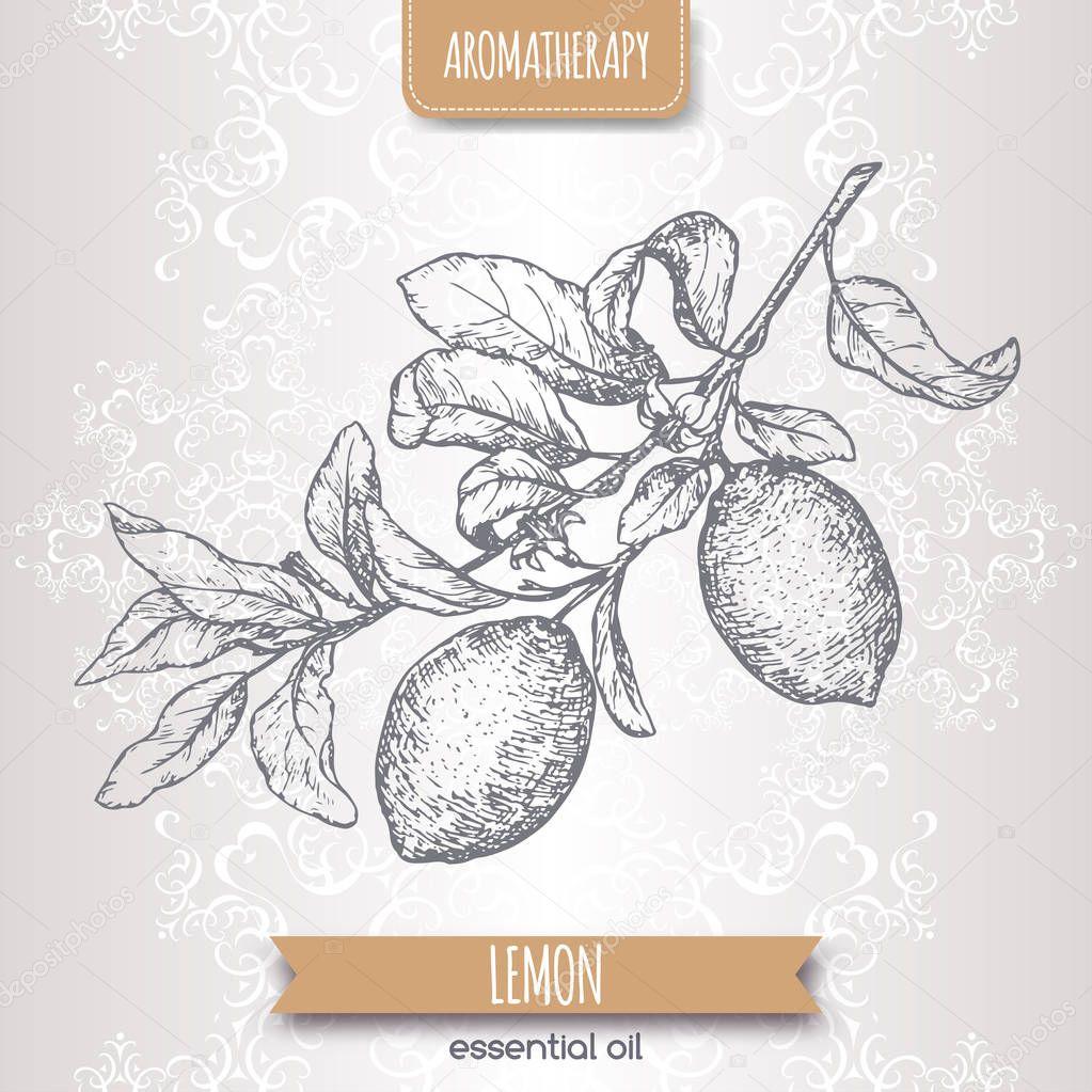 Citrus limon aka lemon branch sketch on elegant lace background.