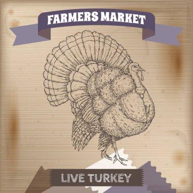 Farmers market label with live domestic turkey sketch.