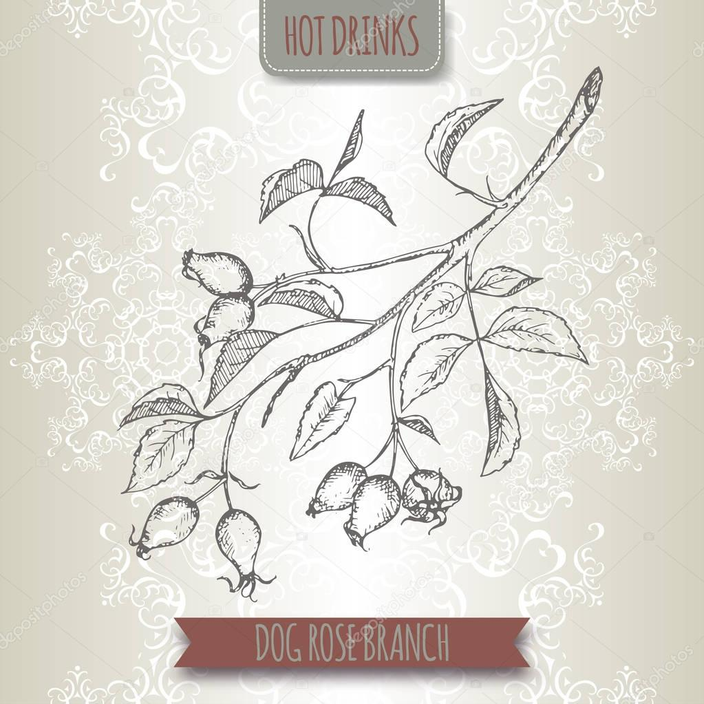 Rosa canina aka dog rose sketch. Hot drinks collection.